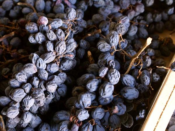 Как сушить виноргад