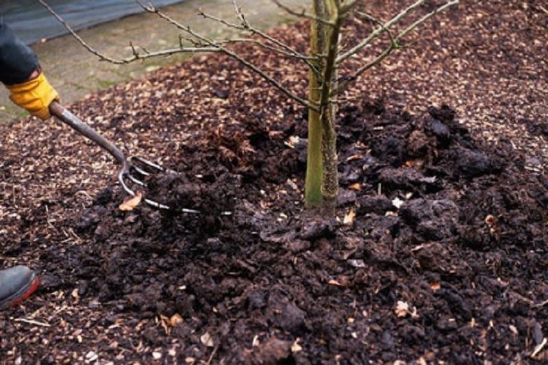 Почему лучше посадить вишню осенью