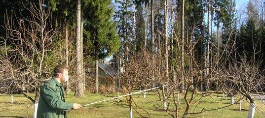 Какими препаратами можно лечить монилиоз вишни