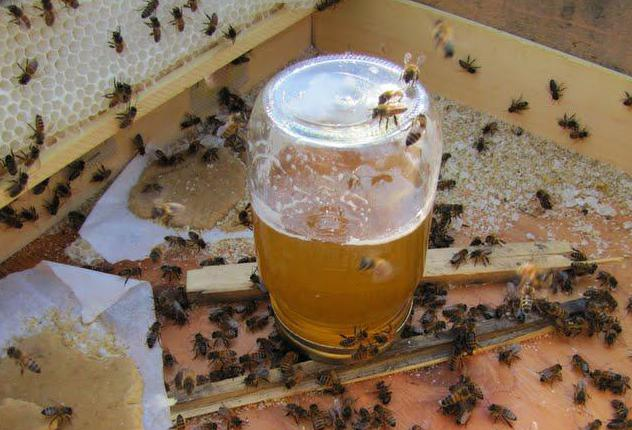 Для чего подкармливают пчел