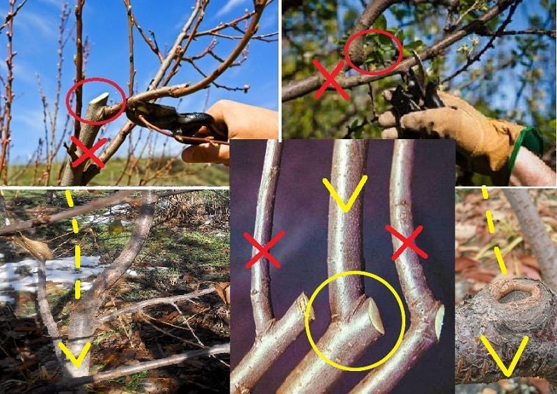Как правильно проводится обрезка вишни