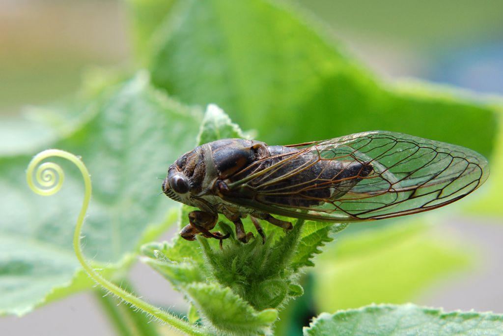 Нападение вредоносных насекомых