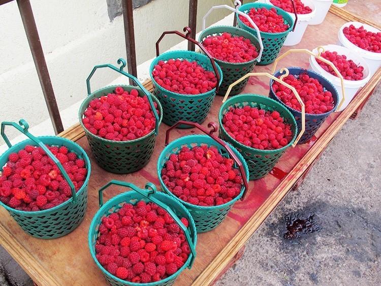 Как получить урожай малины при естественном освещении в разное время года