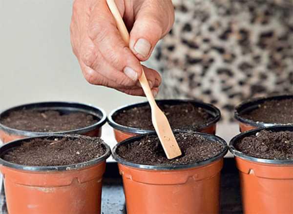 Холодный способ выращивания нектарина